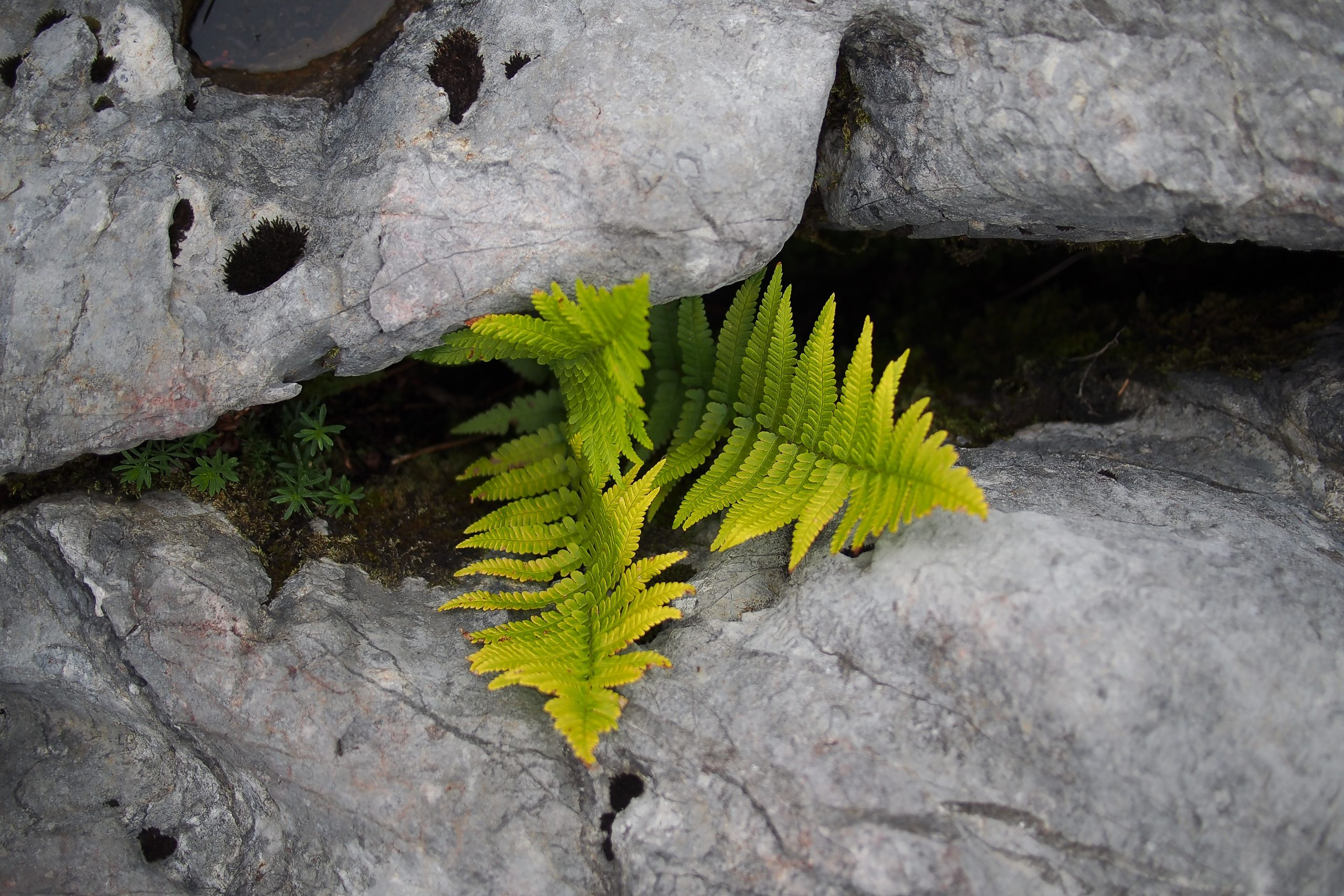 Plant growing in a gap between two rocks